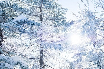 blog-冬⑩.jpg